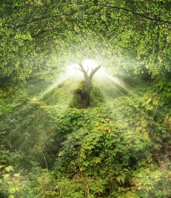 Divine light flowing through the trees